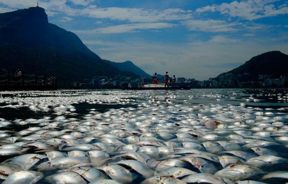Peixes mortos atrapalharam seletiva de remo na Lagoa Rodrigo de Freitas