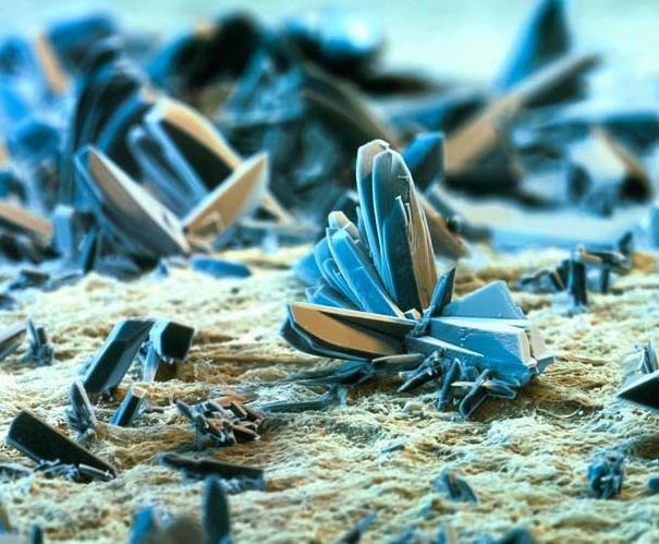 Fundos para luta contra um fungo de calçado