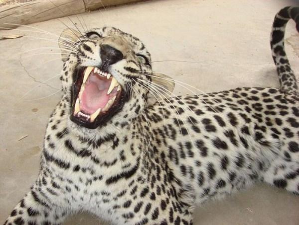 dentista_animais_08