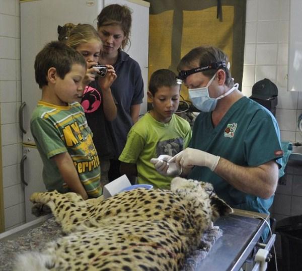 dentista_animais_14