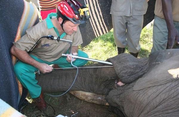 dentista_animais_19