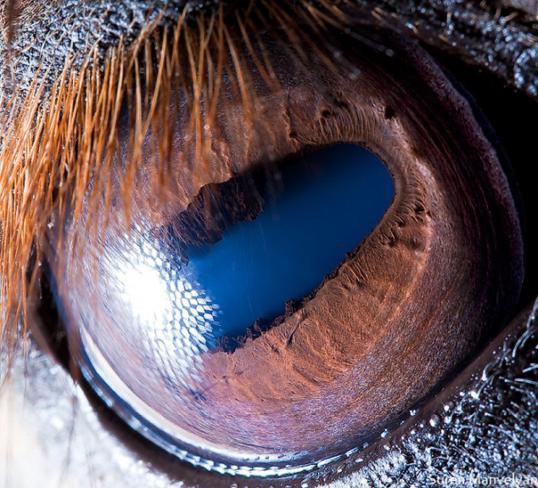 olhos_animais_02