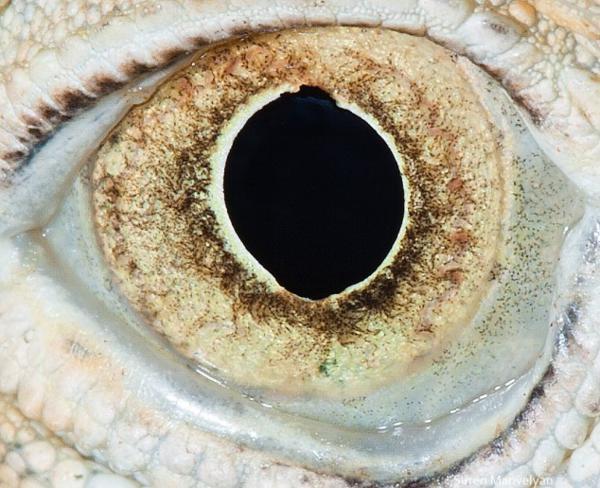 olhos_animais_04