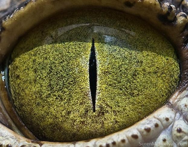 olhos_animais_07