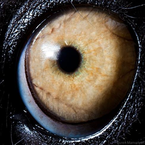 olhos_animais_10