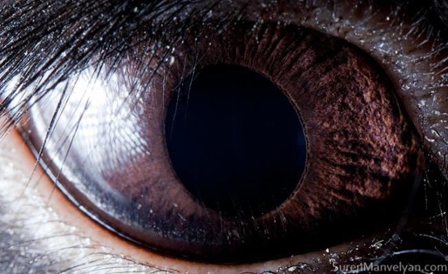 olhos_animais_12