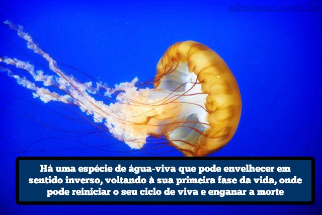 curiosidades_diversas_02