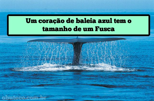 curiosidades_diversas_05