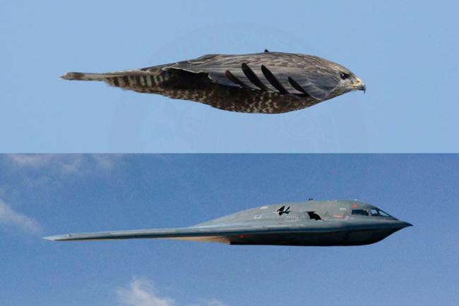 Perfil de um bombardeiro B-2 Spirit, ao lado de uma ave de rapina, sua inspiração