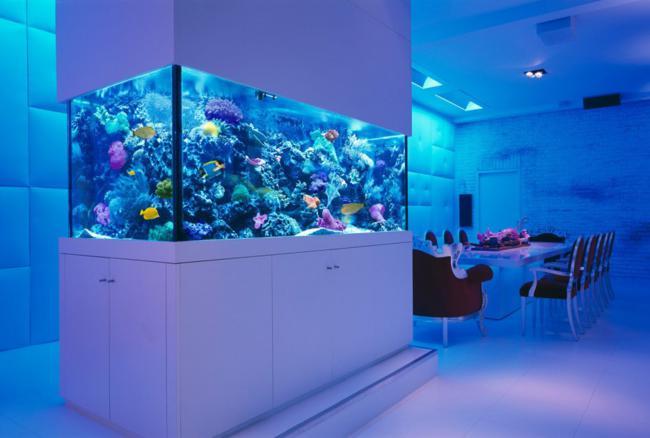aquarios_15