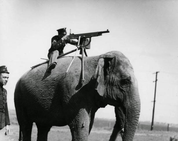 Soldado americano usando metralhadora montado em um elefante, em 1914. Os elefantes não respondem bem ao som dessa metralhadora a poucos centímetros de seus ouvidos.