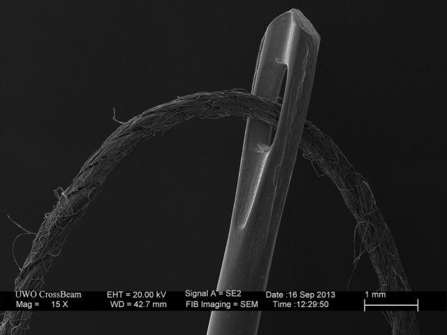 microscopio_imagens_13