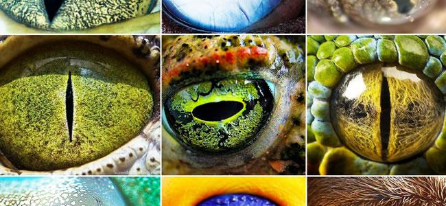 olhos_animais