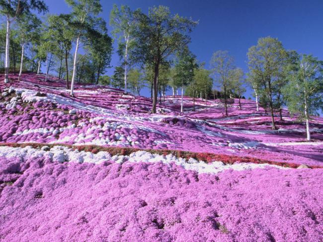 paisagens_coloridas_04