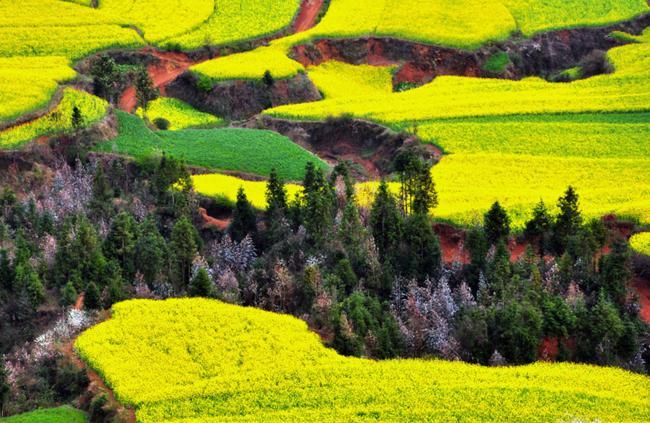 paisagens_coloridas_17