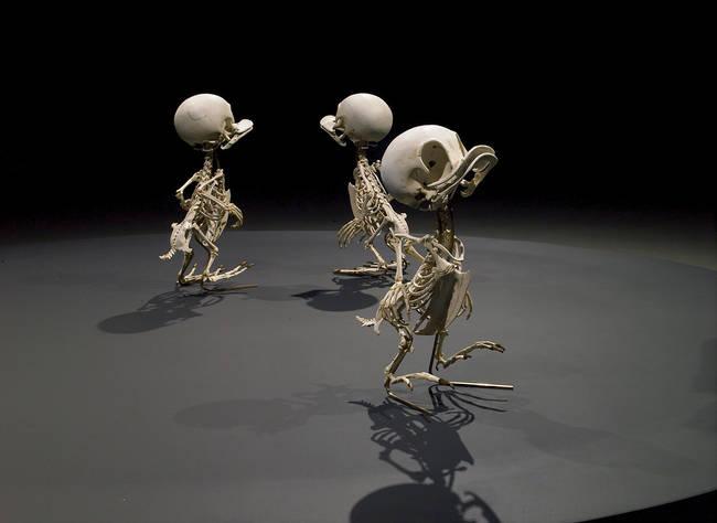 esqueletos_02