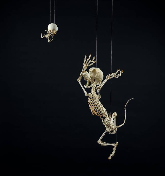 esqueletos_03