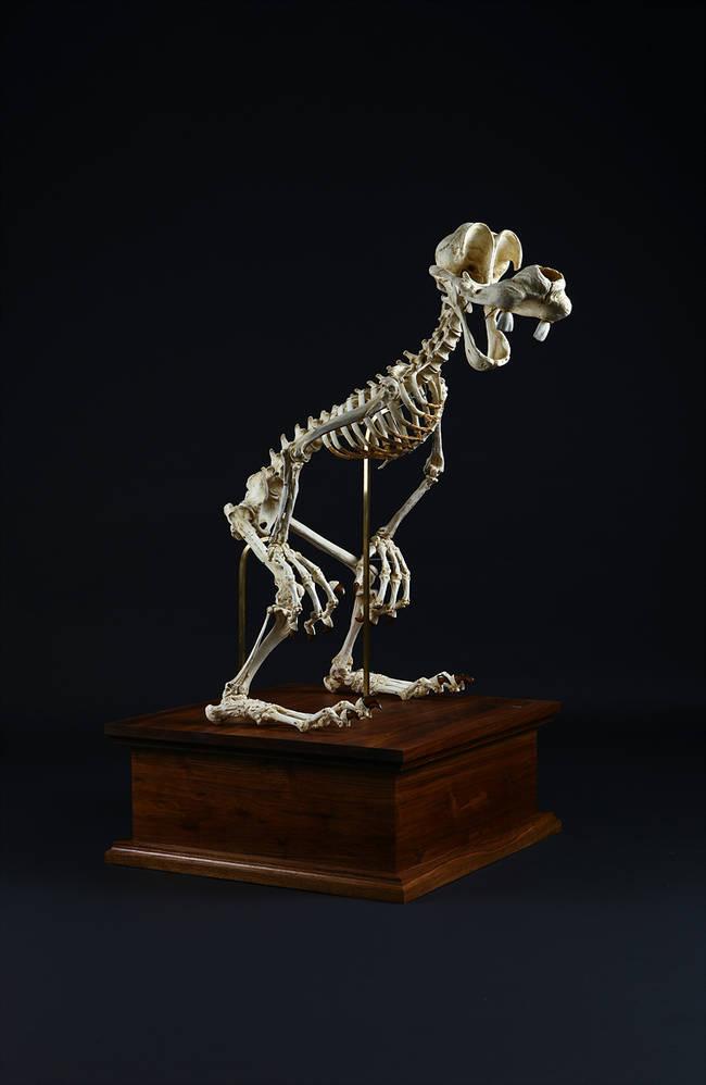 esqueletos_04