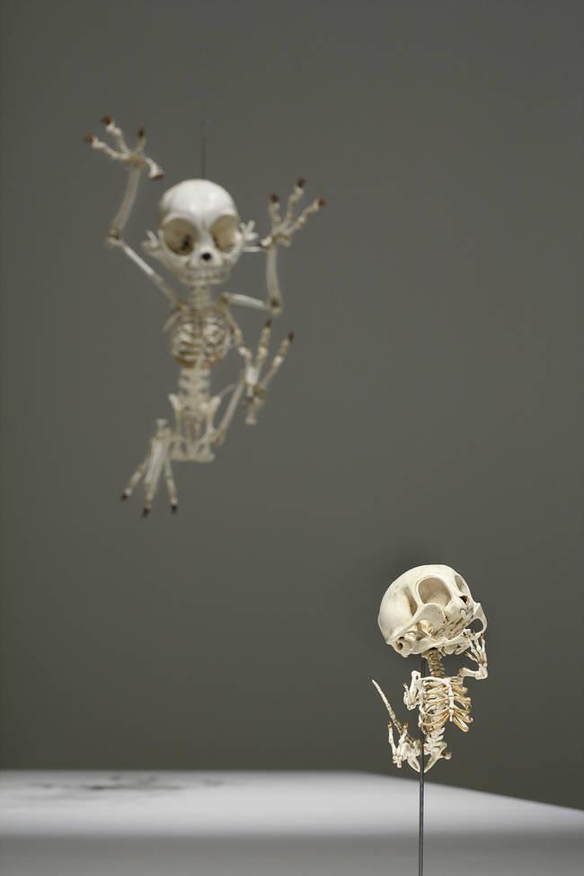 esqueletos_05