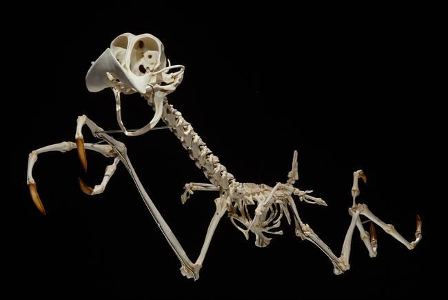 esqueletos_07