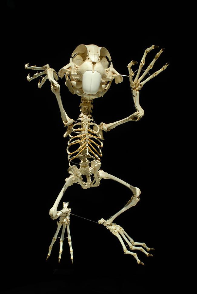 esqueletos_09