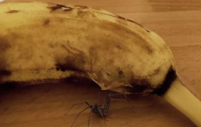 aranha_banana
