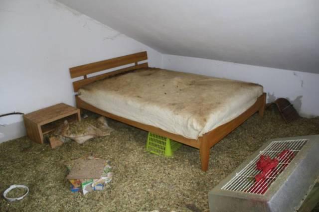 ratos_apartamento_12
