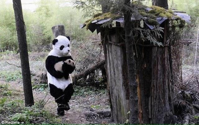 Trabalhadores chineses se vestem de pandas para fazerem os bebês se sentirem mais seguros