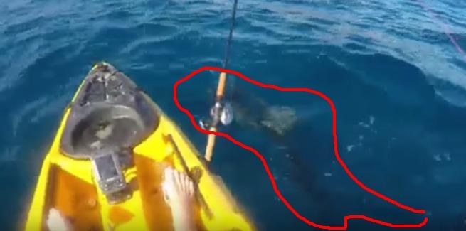 tubaroes