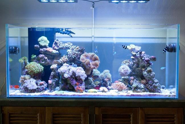 aquario__08
