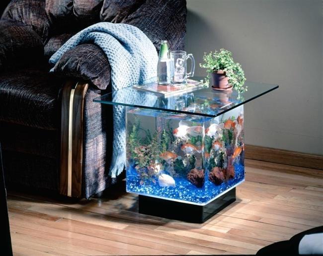 aquario__10