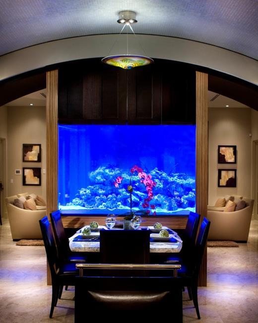 aquario__15