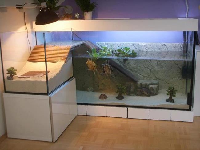 aquario__27