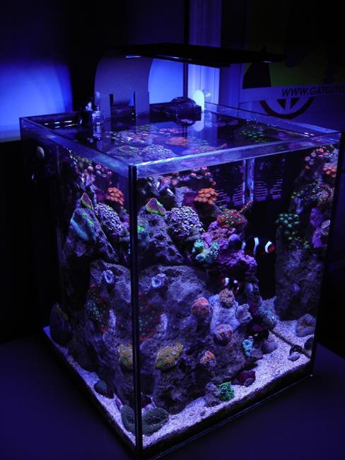 aquario__29