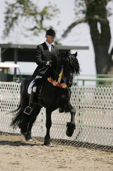 this_horse_might_have_the_worlds_most_fabulous_mane_640_05