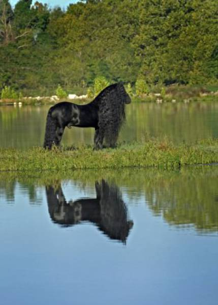 this_horse_might_have_the_worlds_most_fabulous_mane_640_13