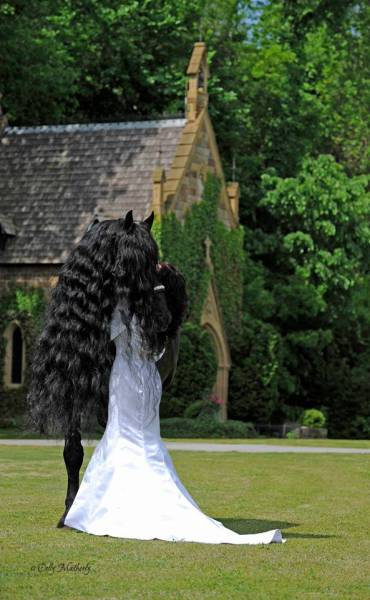 this_horse_might_have_the_worlds_most_fabulous_mane_640_14