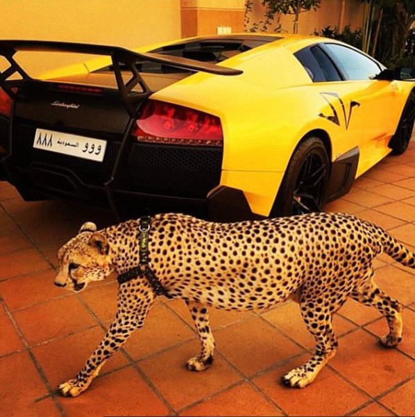 the_filthy_rich_like_to_flaunt_pictures_of_their_exotic_pets_online_640_02