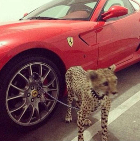 the_filthy_rich_like_to_flaunt_pictures_of_their_exotic_pets_online_640_03