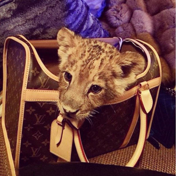 the_filthy_rich_like_to_flaunt_pictures_of_their_exotic_pets_online_640_05