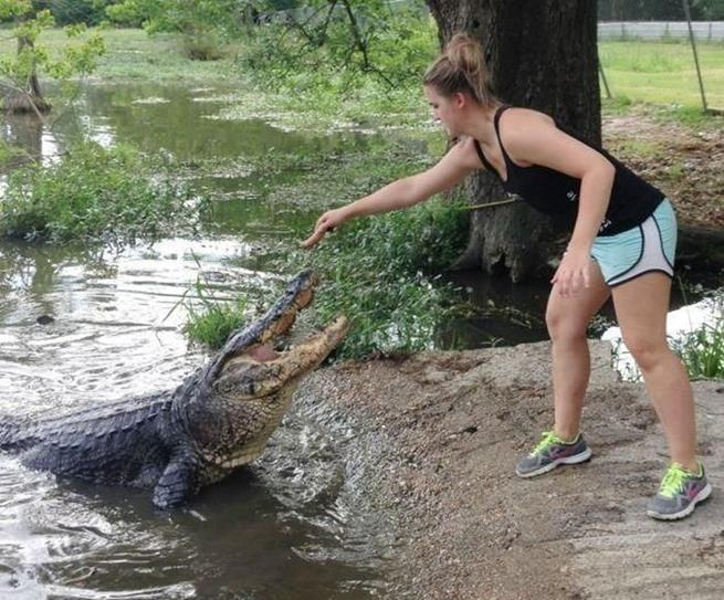 florida_alligator_10