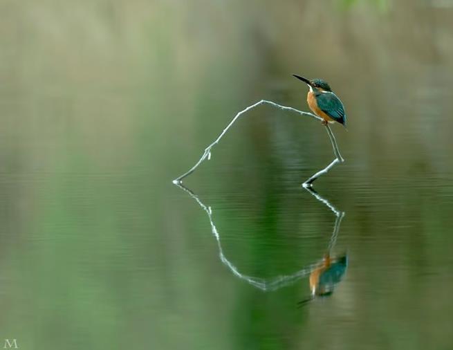 amazing_reflections_34