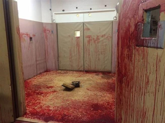 As consequências de um cavalo com sangramento nasal numa sala veterinária