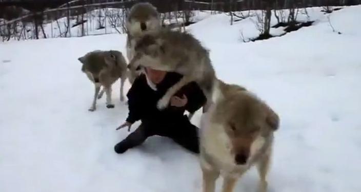 humanos_animais