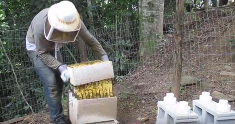 abelhas-ataque