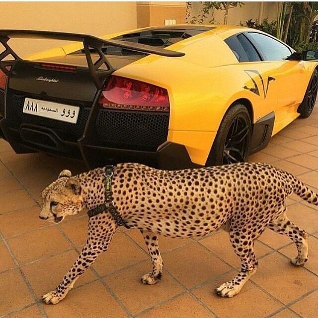 rich_arabs_14