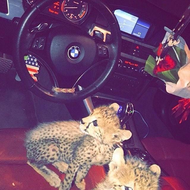 rich_arabs_24