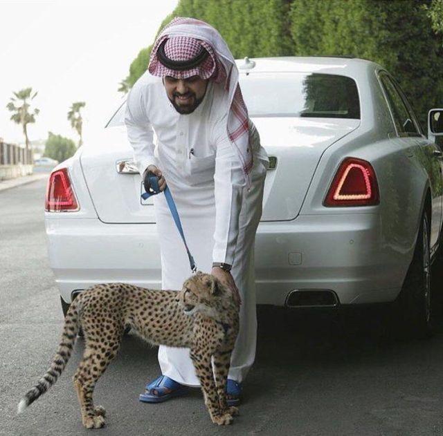 rich_arabs_32