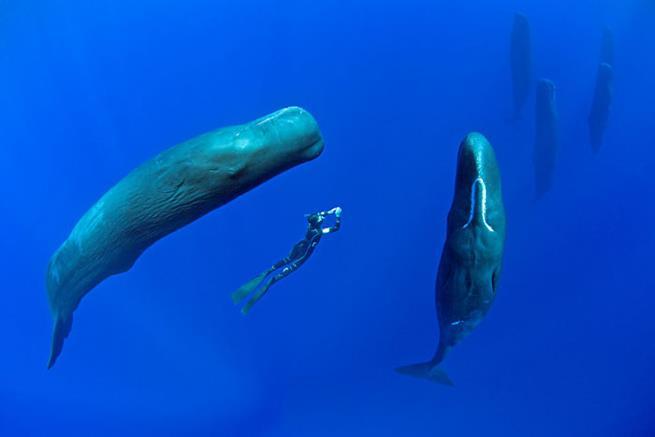 baleias-02