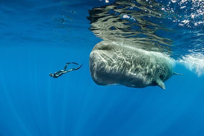 baleias-06